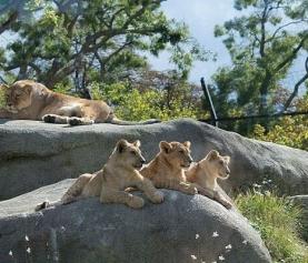 Zoo w Paryżu – przydatne informacje